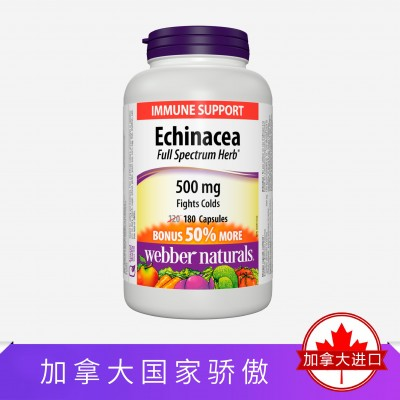 Webber Naturals有机松果菊精华500毫克 感冒发烧咽炎肺炎